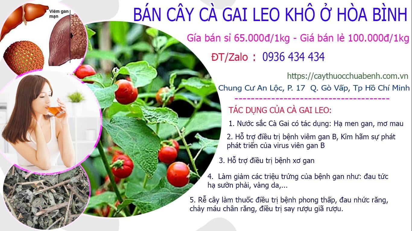 Mua bán Cây Cà Gai Leo khô ở Hòa Bình giá từ 65k
