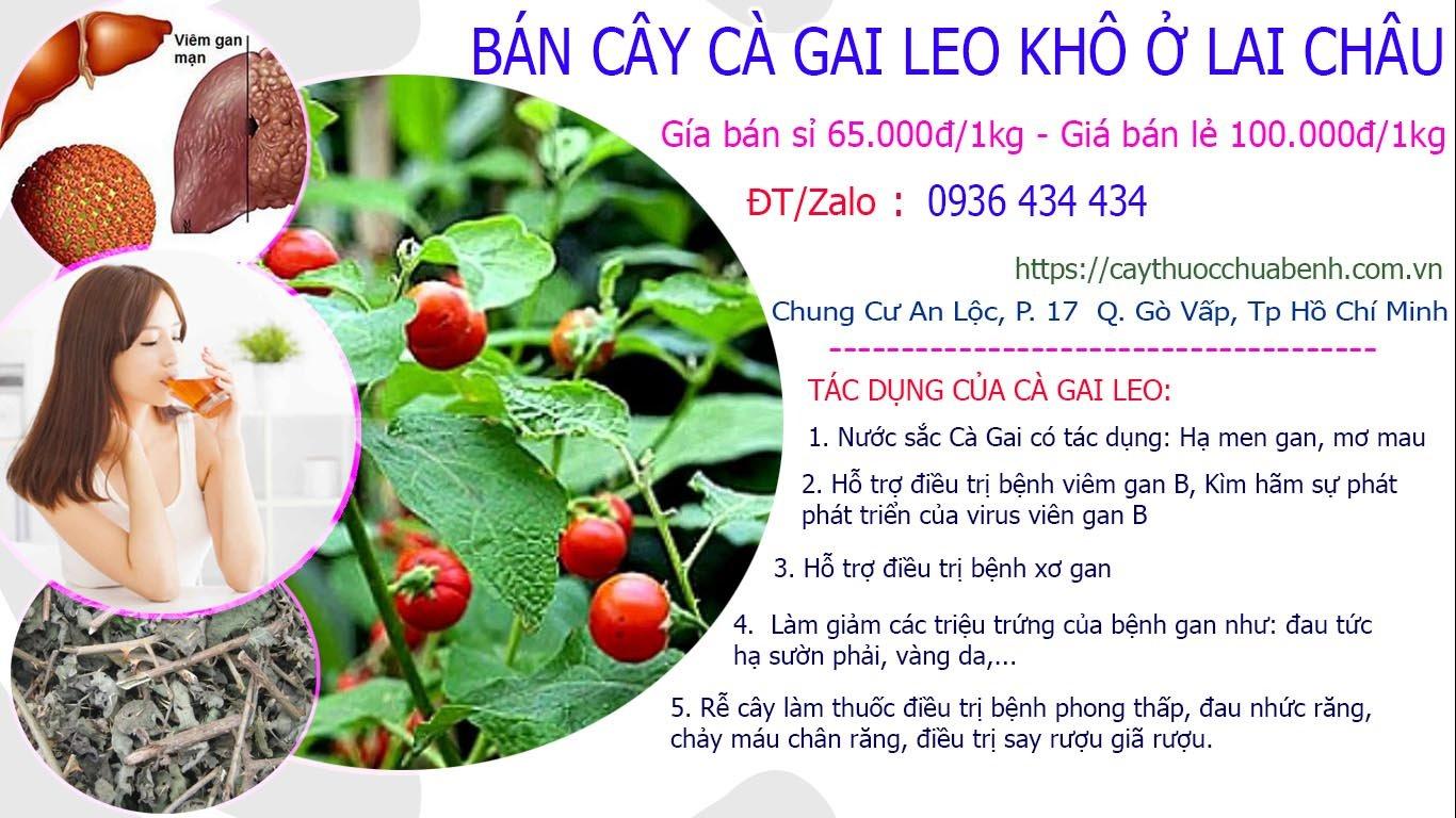 Mua bán Cây Cà Gai Leo khô ở Lai Châu giá từ 65k
