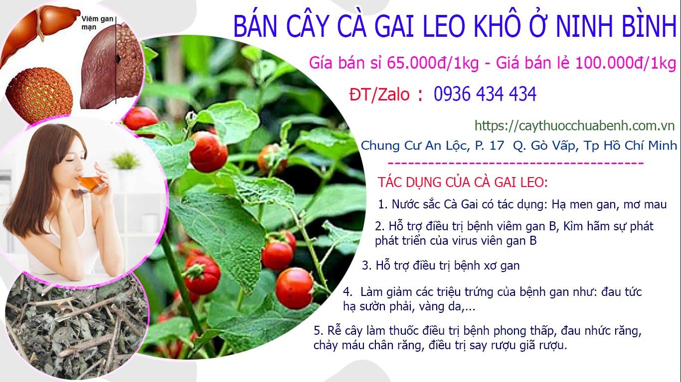 Mua bán Cây Cà Gai Leo khô ở Ninh Bình giá từ 65k