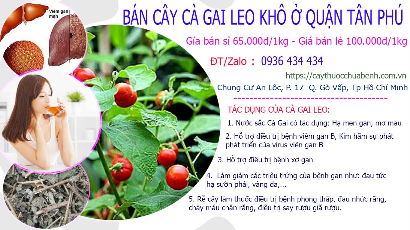 Mua bán Cây Cà Gai Leo khô ở Quận Tân Phú giá từ 65k