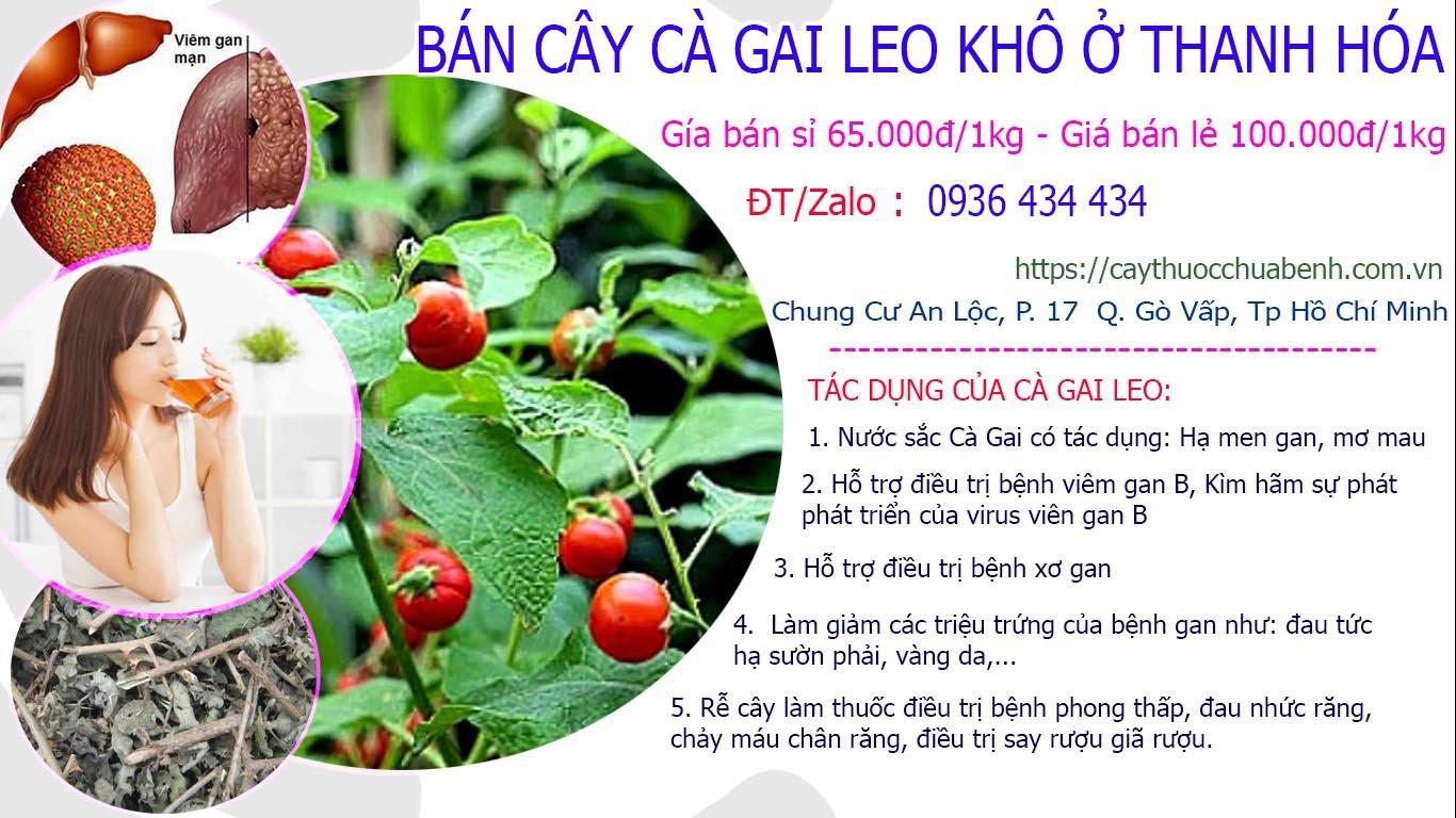 Mua bán Cây Cà Gai Leo khô ở Thanh Hóa giá từ 65k