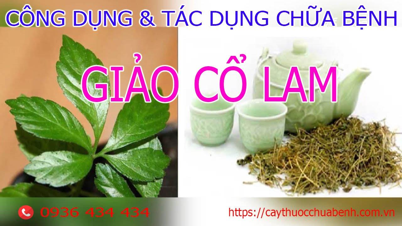 Công dụng và tác dụng chữa bệnh của Giảo Cổ Lam