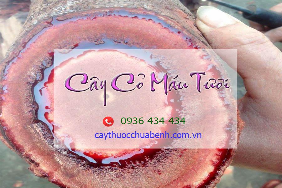 CAY CO MAU TUOI