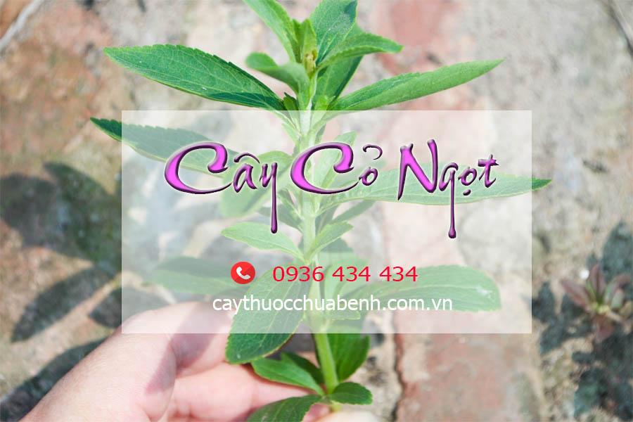 CAY CO NGOT