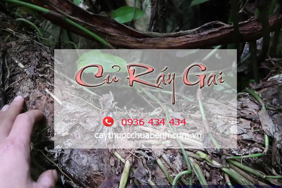 CU_RAY_GAI_TUOI