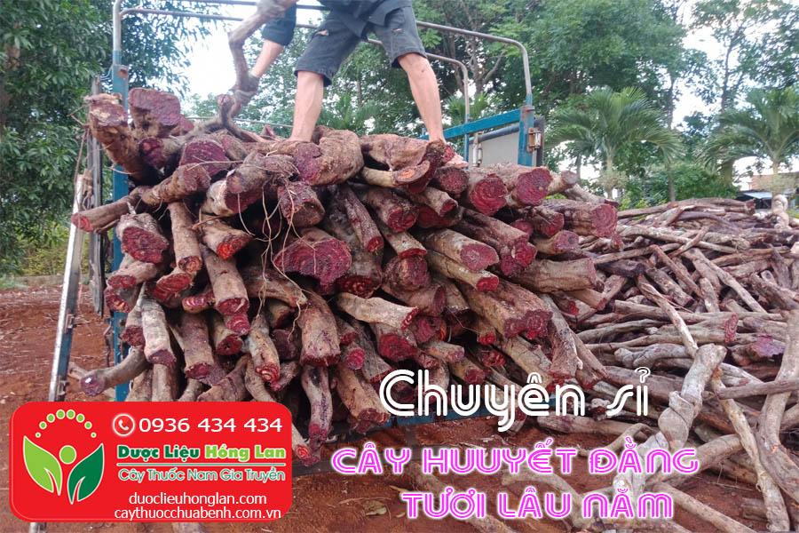 CHUYEN-SI-SO-LUONG-LON-CAY-HUYEN-DANG-CTY-DUOC-LIEU-HONG-LAN