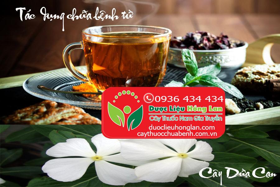 Tác dụng chữa bệnh của Cây Dừa Cạn