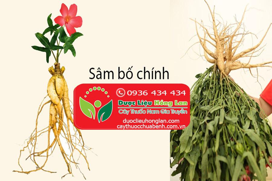 SAM_BO_CHINH_MUA_O_DAU_DUOC_LIEU_HONG_LAN