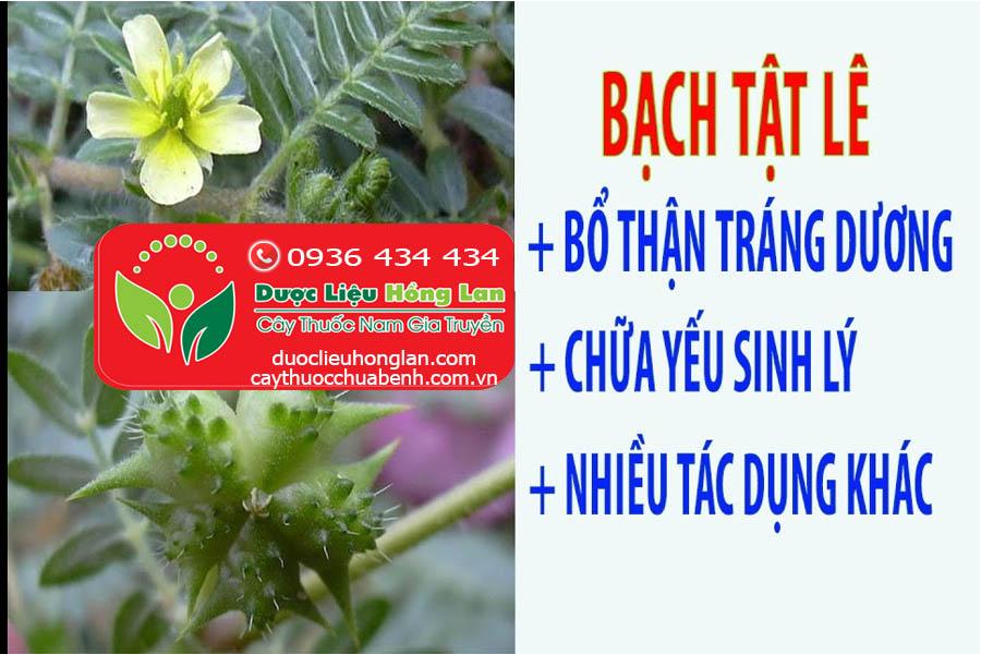 BACH-TAT-LE-CHUA-YEU-SINH-LY-BO-THAN-TRANG-DUONG_DUOC_LIEU_HONG_LAN