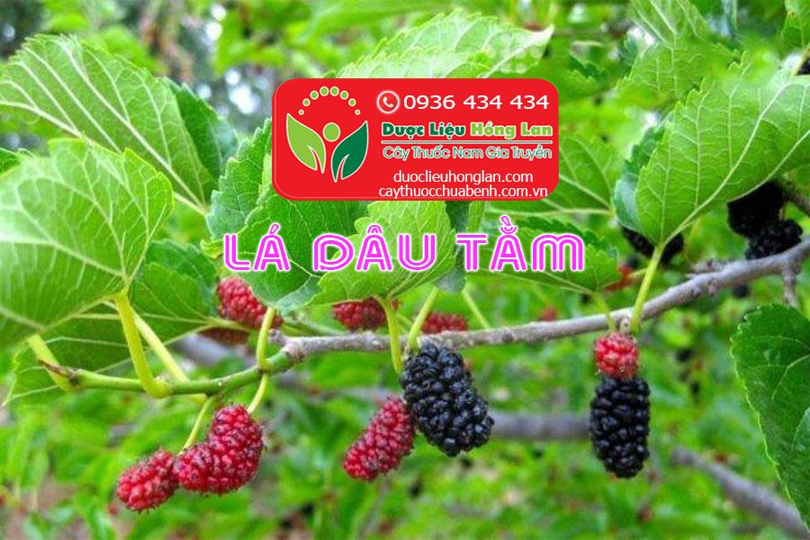 LA-CAY-DAU-TAM-CTY-DUOC-LIEU-HONG-LAN