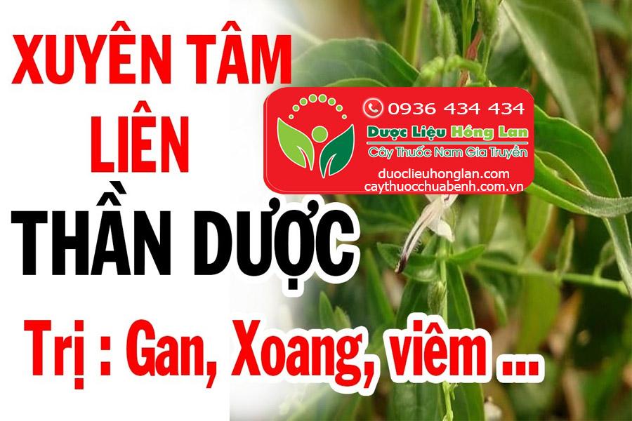 XUYEN-TAM-LIEN-TRI-BENH-GAN-XOANG-VIEM-CTY-DUOC-LIEU-HONG-LAN