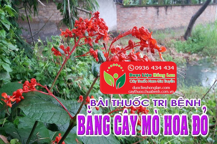 BAI-THUOC-CHUA-BENH-TU-CAY-XICH-DONG-NAM-MO-HOA-DO-CTY-DUOC-LIEU-HONG-LAN
