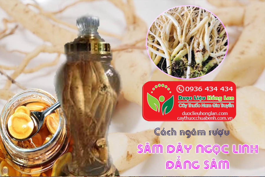 CACH-NGAM-RUOU-SAM-DAY-NGOC-LINH-DANG-SAM-CTY-DUOC-LIEU-HONG-LAN