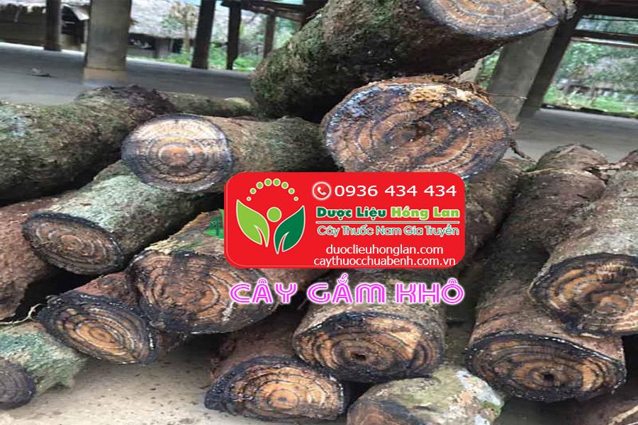 CAY-GAM-TRI-BENH-GI-CTY-DUOC-LIEU-HONG-LAN