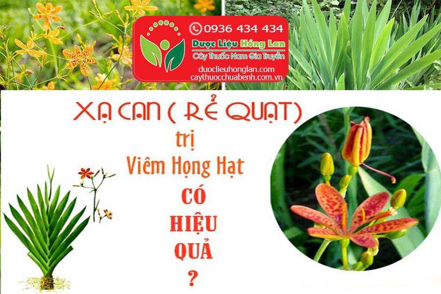 CAY-XA-CAN-RE-QUAT-CHUA-BENH-VIEM-HONG-CTY-DUOC-LIEU-HONG-LAN