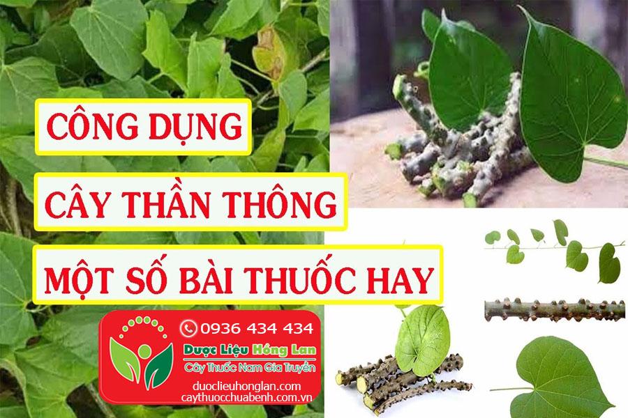 CONG-DUNG-BAI-THUOC-CHUA-BENH-TU-CAY-THAN-THONG-CTY-DUOC-LIEU-HONG-LAN