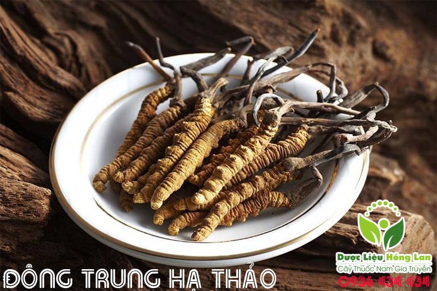 DONG-TRUNG-HA-THAO-NGAM-RUOU-CHUA-YEU-SINH-LY-VA-LIET-DUONG-CTY-DUOC-LIEU-HONG-LAN
