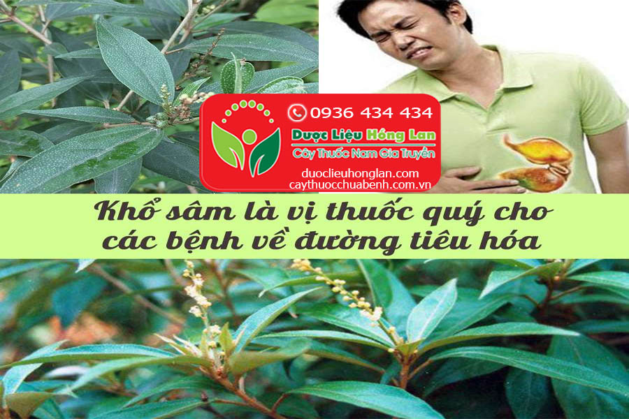 KHO-SAM-CHUA-BENH-TIEU-HOA-CTY-DUOC-LIEU-HONG-LAN