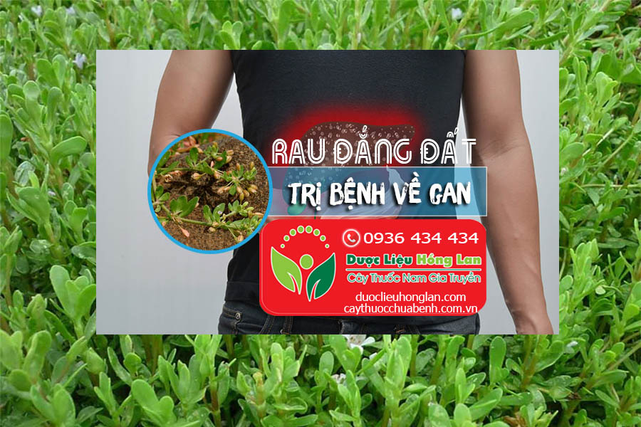 RAU-DANG-DAT-CHUA-BENH-GAN-CTY-DUOC-LIEU-HONG-LAN