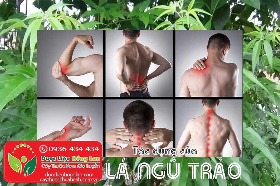 TAC-DUNG-CUA-LA-CAY-NGU-TRAO-CTY-DUOC-LIEU-HONG-LAN