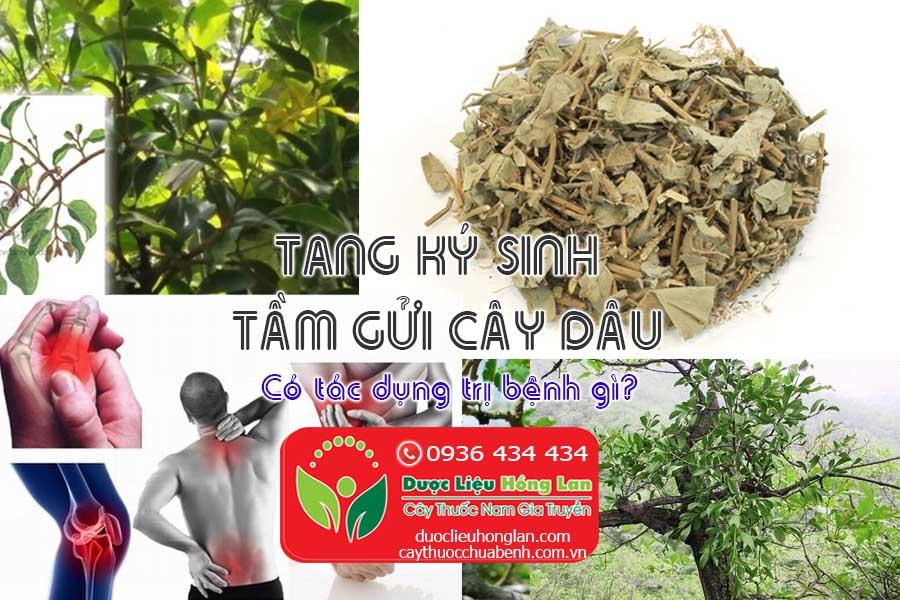 TANG-KY-SINH-TAM-GUI-CAY-DAU-TAM-CO-TAC-DUNG-CHUA-BENH-GI-CTY-DUOC-LIEU-HONG-LAN