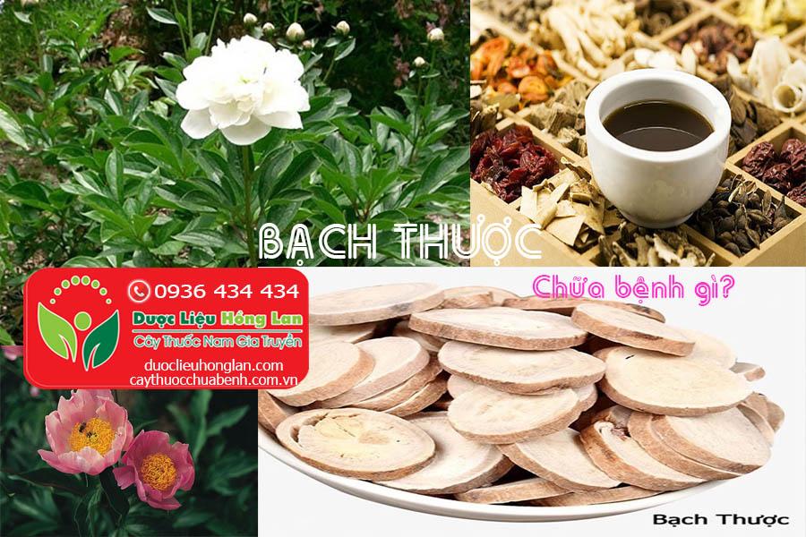 VI-THUOC-BACH-CHUA-BENH-GI-THUOC-CTY-DUOC-LIEU-HONG-LAN