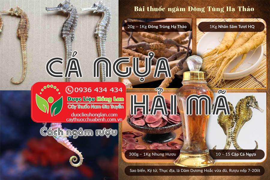 CACH-NGAM-RUOU-CA-NGUA-HAI-MA-CTY-DUOC-LIEU-HONG-LAN