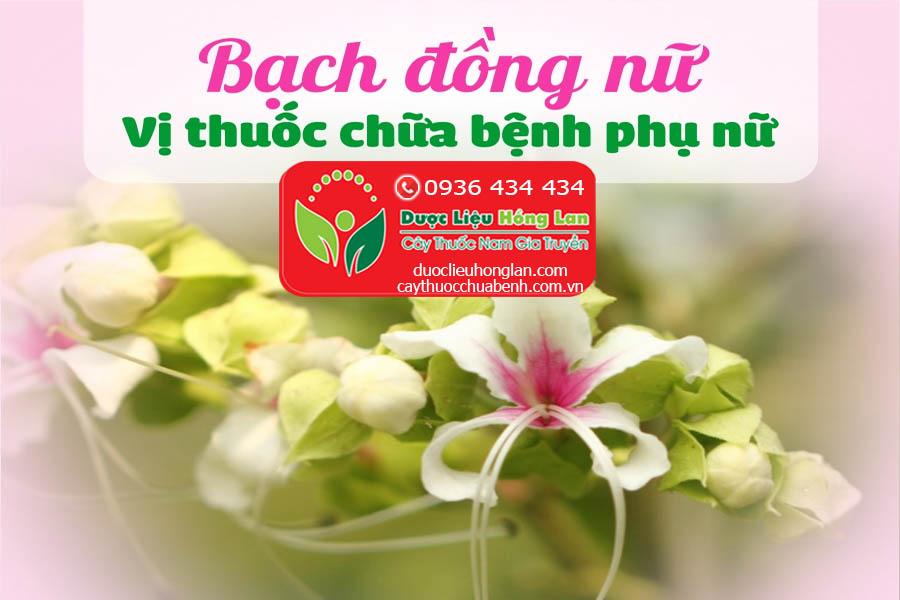 CAY-BACH-DONG-NU-CHUA-BENH-GI-CTY-DUOC-LIEU-HONG-LAN