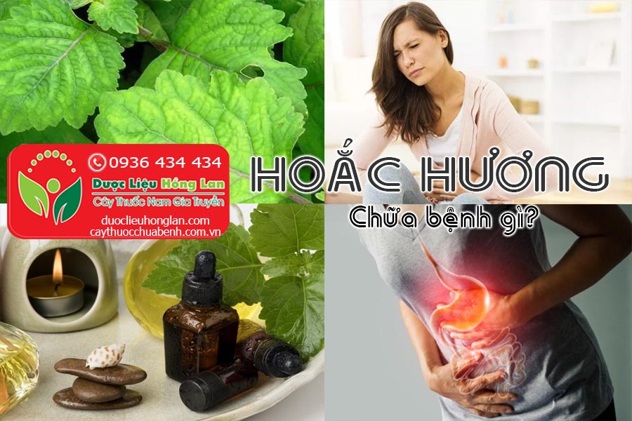 CAY-HOAC-HUONG-CHUA-BENH-GI-CTY-DUOC-LIEU-HONG-LAN