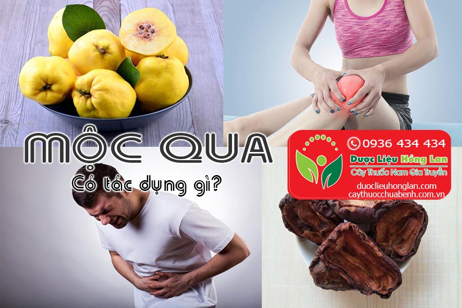 VI-THUOC-MOC-QUA-CO-TAC-DUNG-GI-CTY-DUOC-LIEU-HONG-LAN